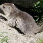 Alpinism fauna & flora