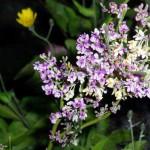 Flora & fauna in NZ
