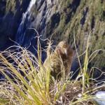 Wildlife in New Zealand